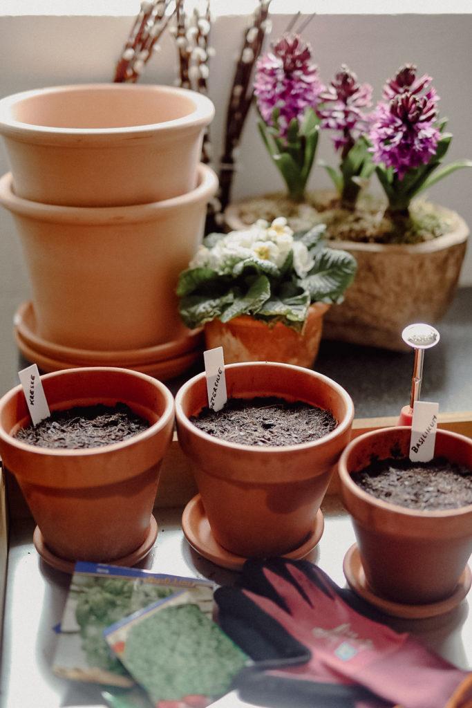 Herb garden, kitchen garden, Kräuter, Kräuteraussaat